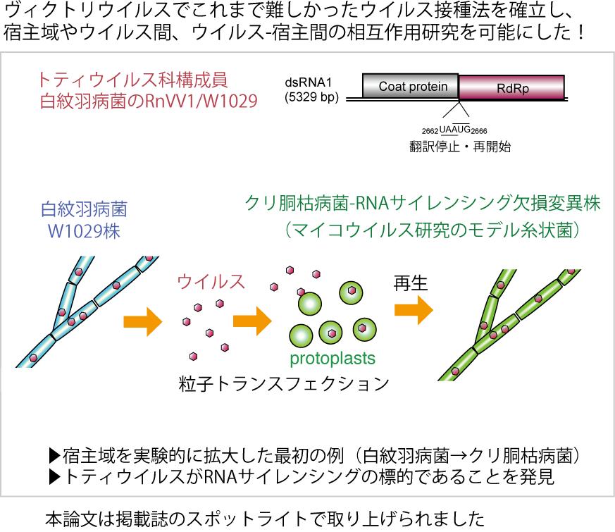 RnVV1 Fig.