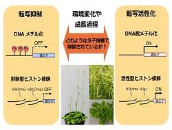 プレゼンテーション4.pptx