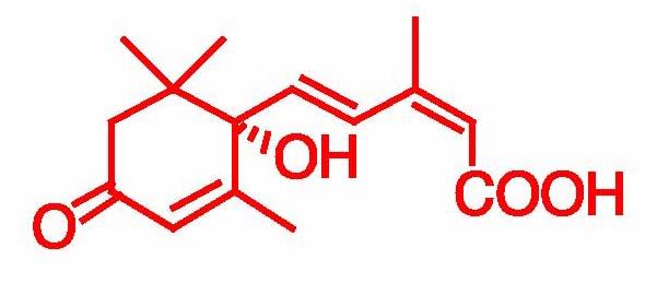 アブシジン酸応答機構 の解析 | ...