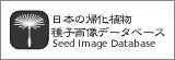 7.日本の帰化植物 種子画像データベース
